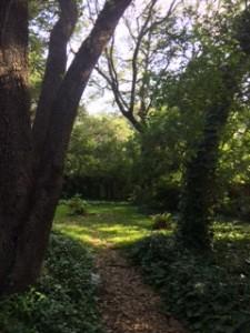backyardblog