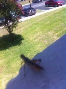 grasshopper on top of world