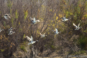 flyingbirds